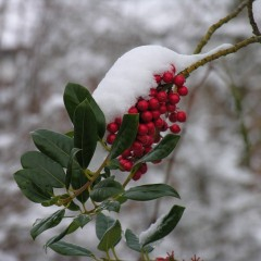 Warum nicht eine Winterhochzeit?